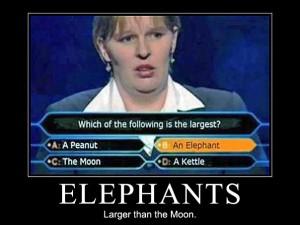 Elephants – Larger than the moon